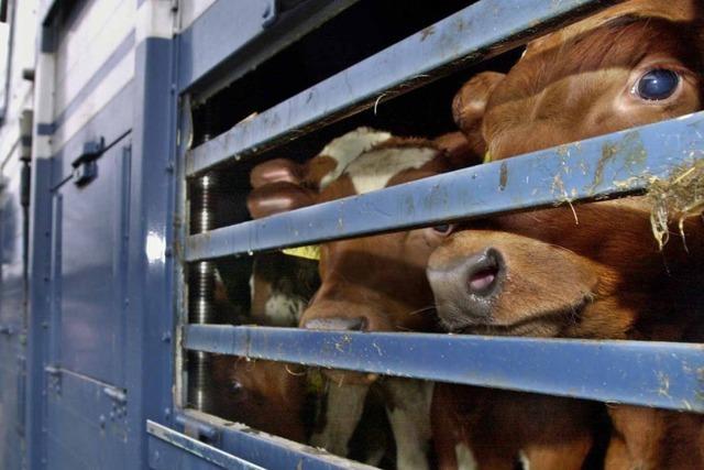 Amtstierarzt über Qualen von Nutztieren: