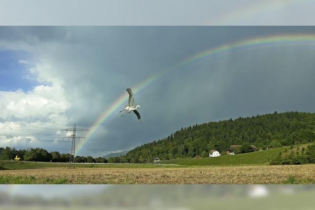 Reiherflug am Regenbogen