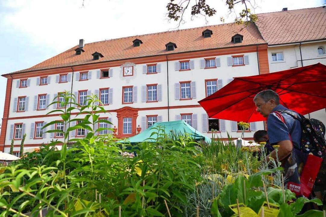 Die Diga findet erstmals im Spätsommer statt und unter besonderen Bedingungen.  | Foto: Ralf H. Dorweiler