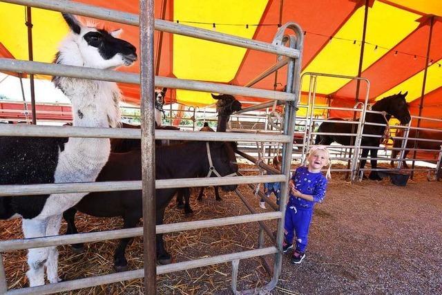 Circus Manuel Weisheit wagt den Neustart nach Corona – ohne Tiger