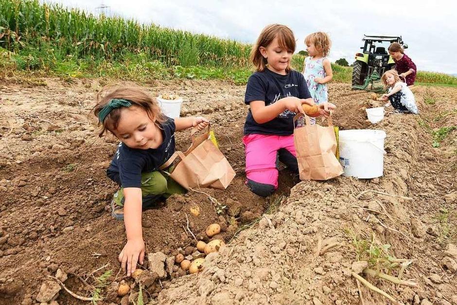 Nicht nur die Kinder hatten großen Spaß am Kartoffeln ernten (Foto: Rita Eggstein)
