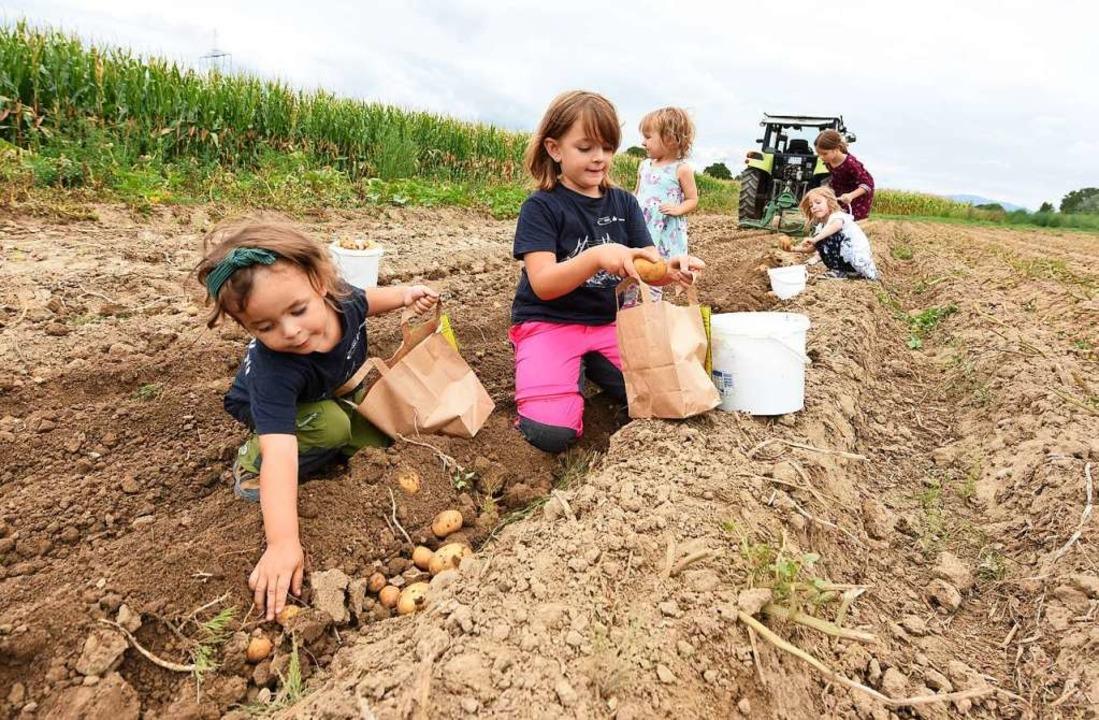 Raus aus der Stadt, rauf auf den Acker...en großen Spaß bei der Kartoffelernte.  | Foto: Rita Eggstein