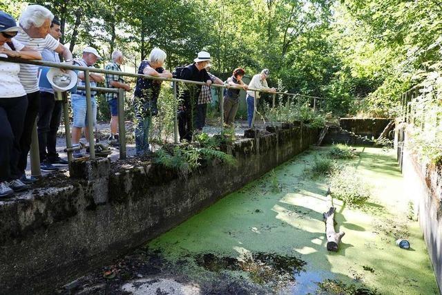 Auf dem Langenhard bei Lahr baden heute Kröten dort, wo einst Panzer gewaschen wurden