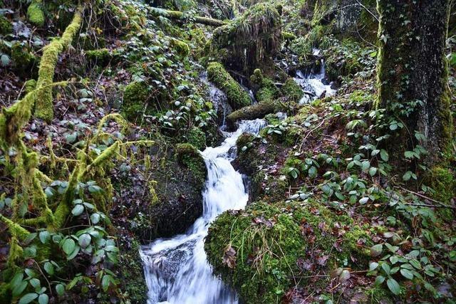 Die Heißbachschlucht zwischen Sallneck und Wambach ist ein Naturkleinod