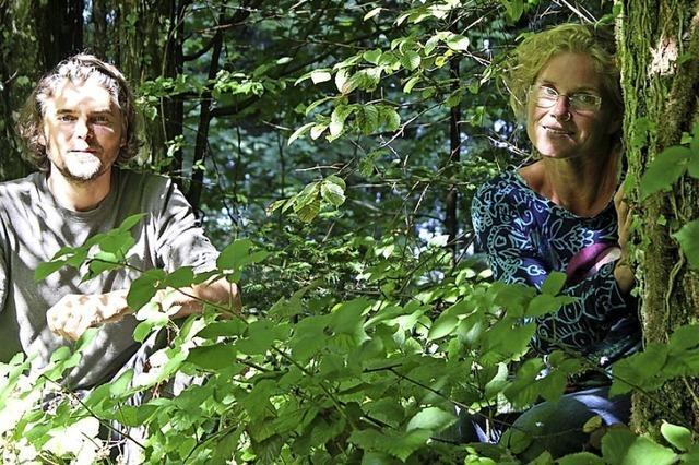 Der Wald als Gesundheitsspender