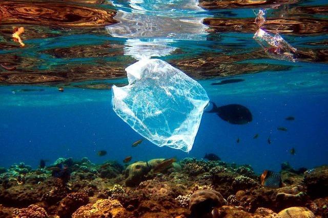 Warum ist Plastikmüll im Meer so gefährlich?