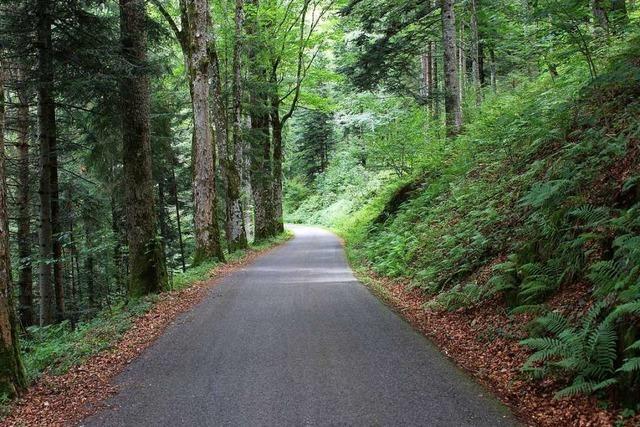 Im Fuchswald bei Schönau haben Radfahrer ihre Ruhe