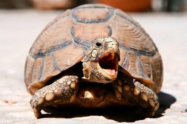 Was macht Schildkröten zu so besonderen Tieren?