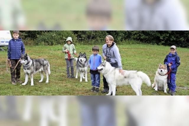 Sommercamp mit Schlittenhunden in Todtmoos