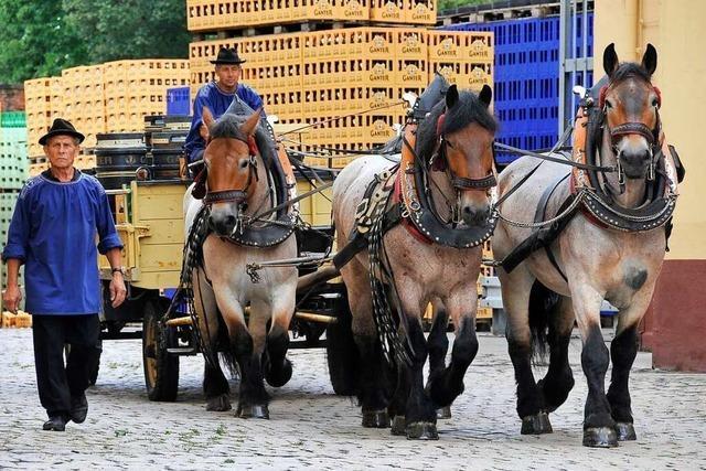 Freiburger Brauerei Ganter gibt Brauereipferde wegen Corona-Krise ab