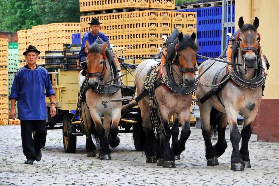 Die Ganter-Pferde mit ihrer Kutsche vor der Brauerei (Archivbild).  | Foto: Ingo Schneider