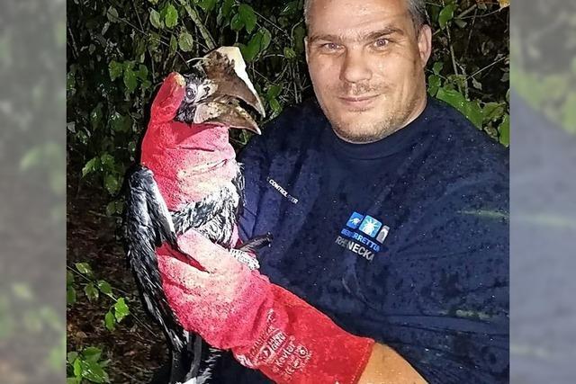 Nach Löwenbaby auch Nashornvogel gerettet