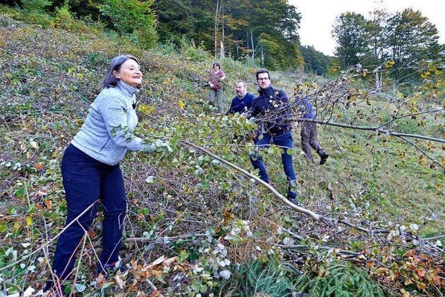 Freiburg-Kappler sollen mithelfen, dass Weiden nicht zuwachsen