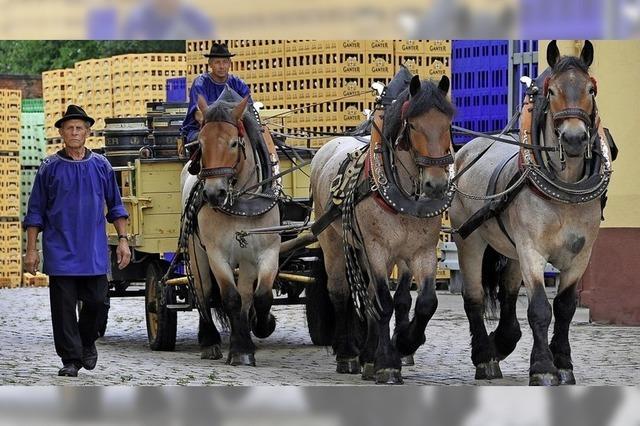 Wegen Corona hat sich die Brauerei Ganter von ihren Brauereipferden getrennt