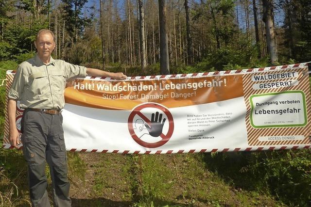 Klimawandel und Borkenkäfer bedrohen den Wald