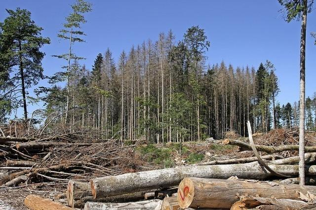 Land hilft Privatwaldbesitzern mit 30 Millionen Euro