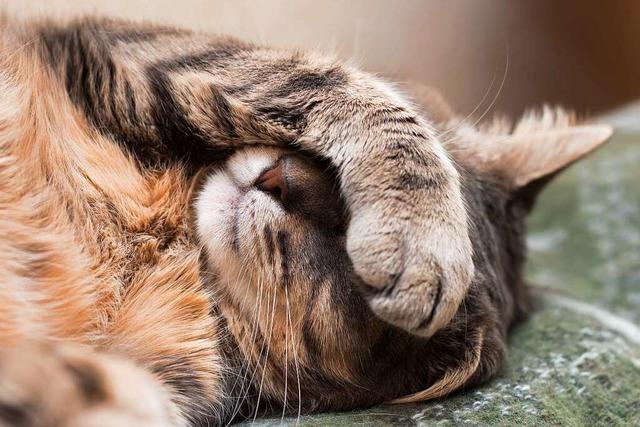 Tierheimen in der Region Freiburg fehlen in der Corona-Krise Einnahmen