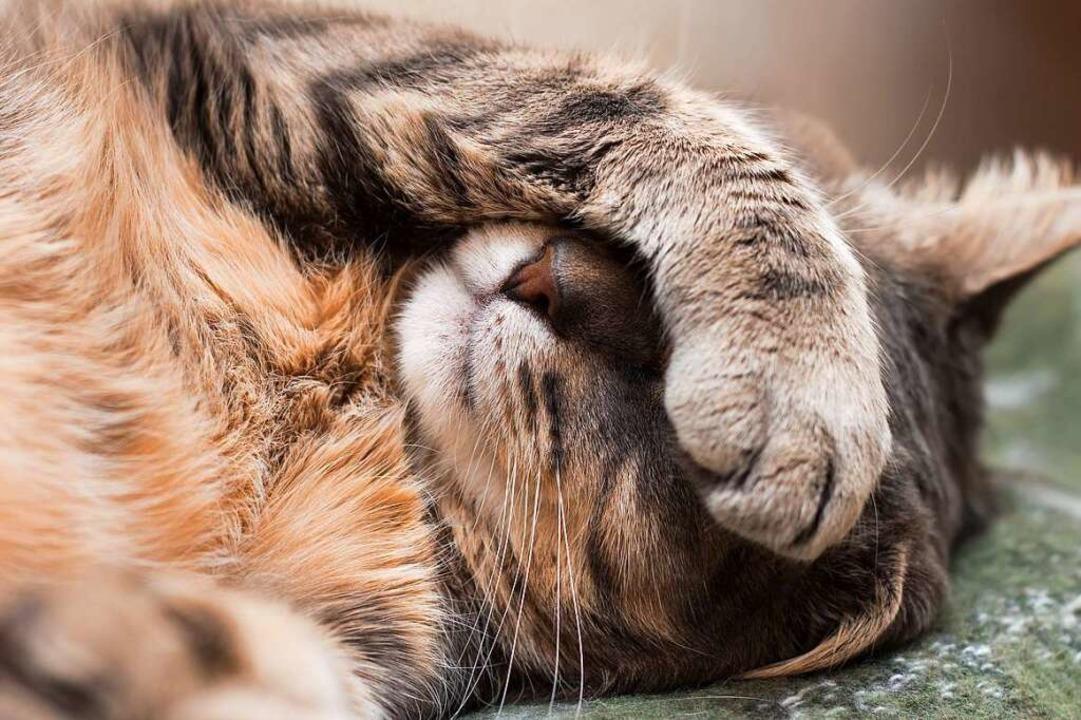 Tierheime und deren Bewohner haben es derzeit nicht leicht (Symbolbild).  | Foto: katyamaximenko (stock.adobe.com)