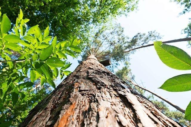 Wie man den Wald bewusst für den Klimawandel stärken kann