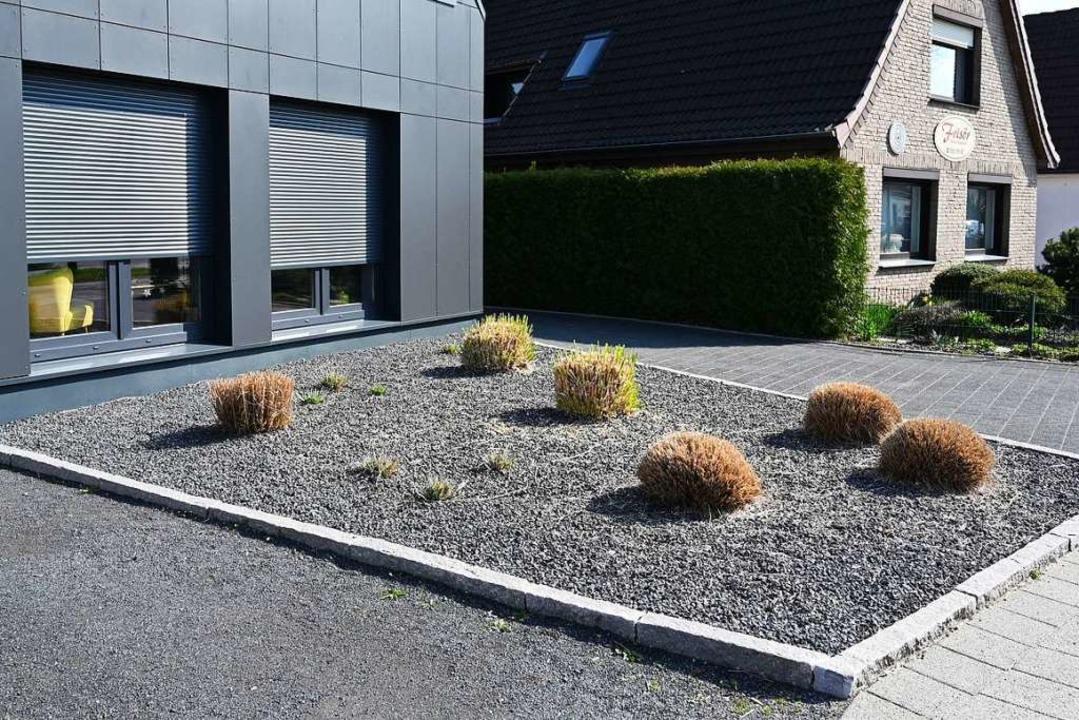 Auch in Schottergärten kann Unkraut wachsen.  | Foto: Carmen Jaspersen
