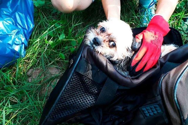 Putztrupp rettet einen Hund in einer Tasche aus der Wiese bei Steinen