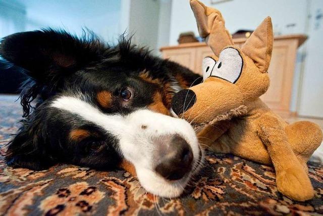 Entscheidung zur Erhöhung der Hundesteuer in Hohberg vertagt