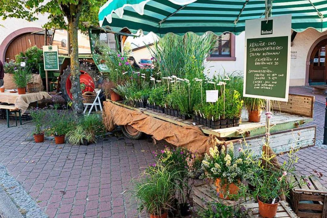 Nachschub für den eigenen Hausgarten g...d des Staudengärtners Stefan Huthmann.    Foto: Hubert Gemmert