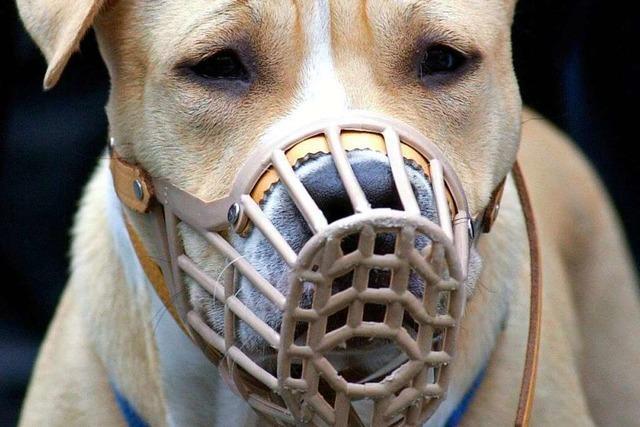 Die Hundesteuer in Kandern soll steigen