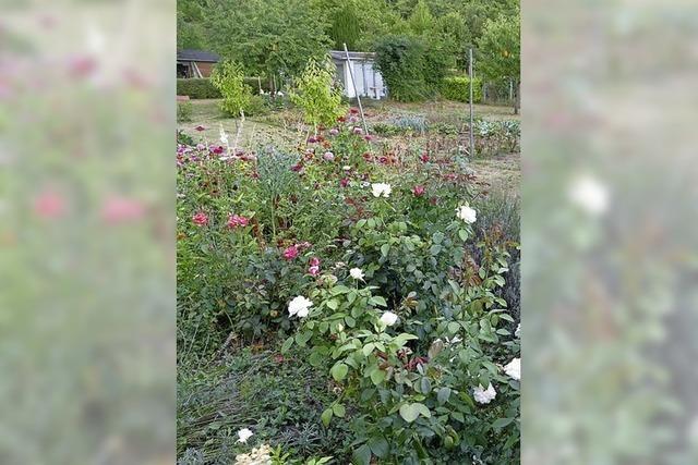 Wertvolle Tipps für mehr Artenvielfalt im Garten