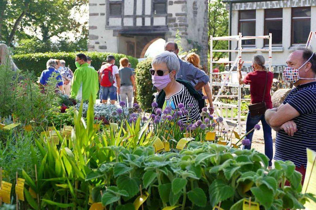Knapp 7000 Besucher kamen am Wochenende zur Diga in Rheinfelden.  | Foto: Dora Schöls