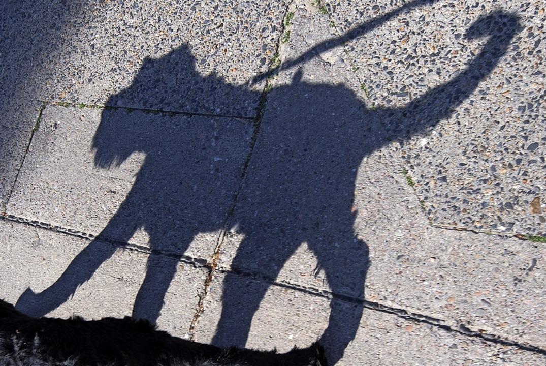 Ein Schatten auf vier Pfoten   | Foto: Ralf Hirschberger