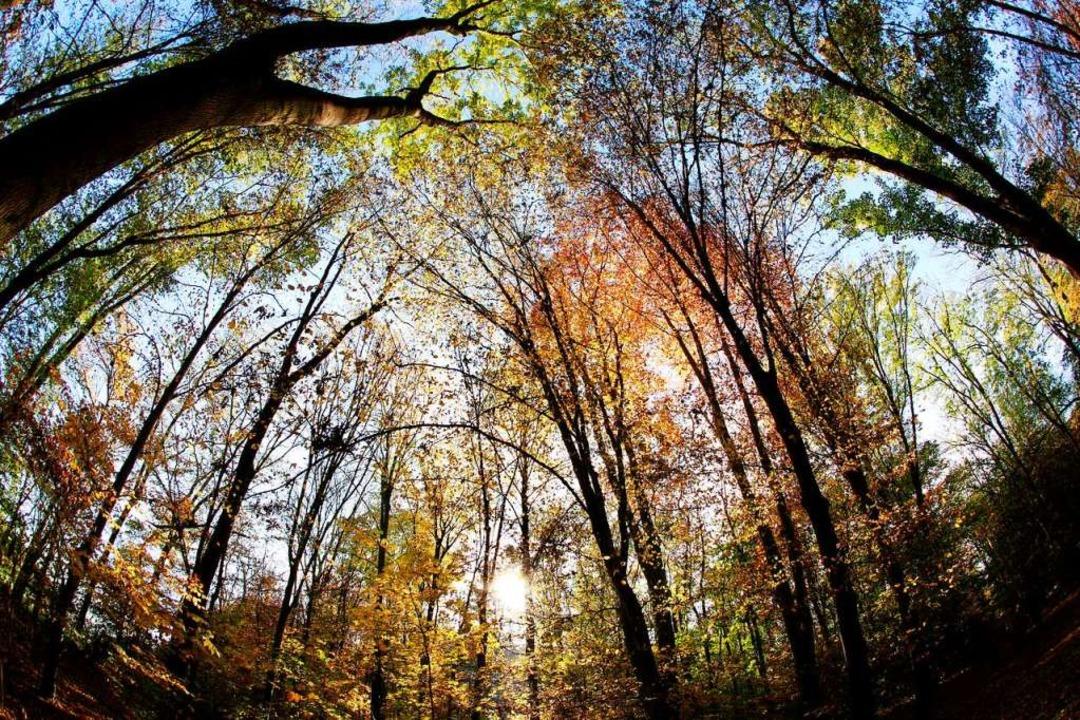 Selbst Bäume wie die heimische Buche k... ihrer tolerierbaren Wuchsbedingungen.  | Foto: Rolf Vennenbernd