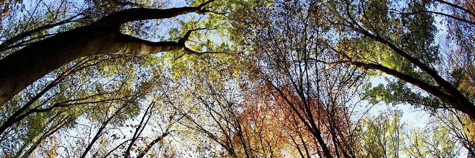 Bürgerinitiative will Wälder sich selbst überlassen