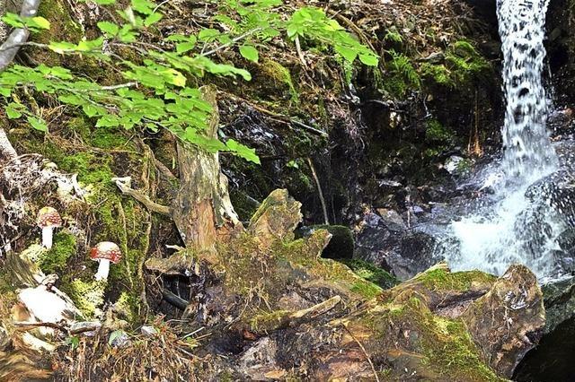 Hochschwarzwald Tourismus GmbH zieht zufriedene Zwischenbilanz – trotz Corona