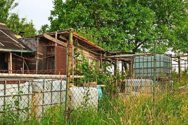 Stadt Offenburg nimmt illegale Hütten ins Visier