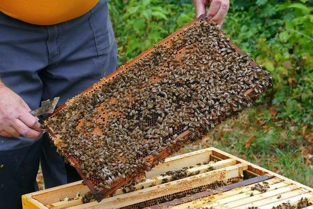 Warum sind Bienen nützlich?