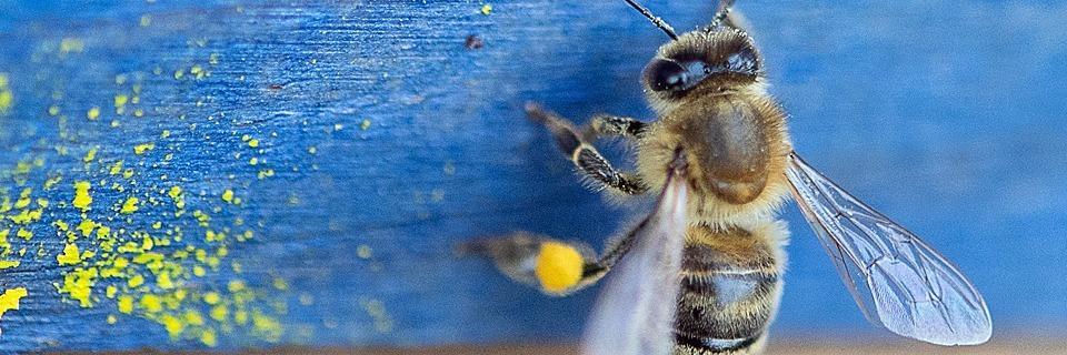 In Südbaden können Firmen Bienen mieten - sogar im Industriegebiet