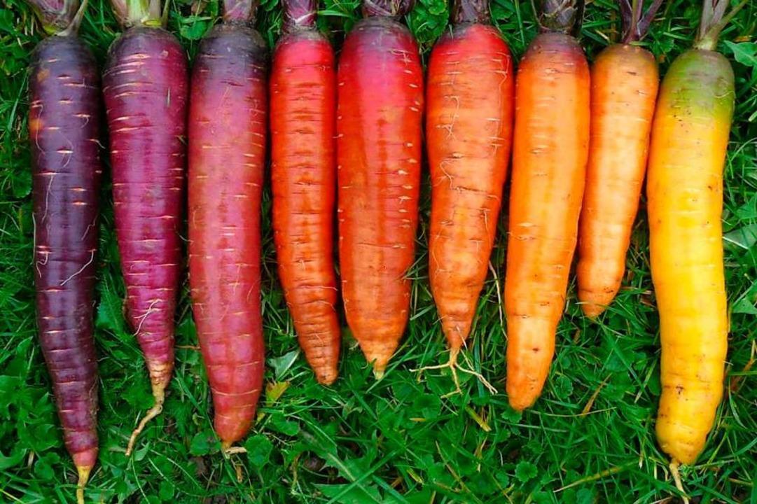 Vielfalt auch bei Karotten  | Foto: Hilde Erner