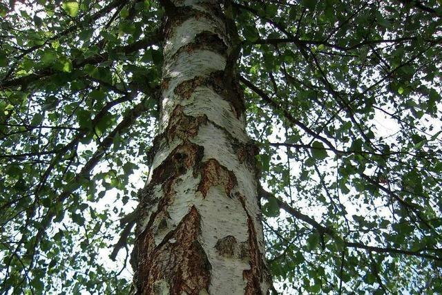 Bäume im Lörracher Stadtgebiet sollen besser geschützt werden