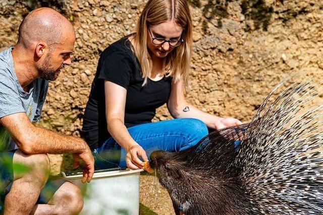 Fotos: Die Arbeit eines Tierpflegers im Basler Zoo