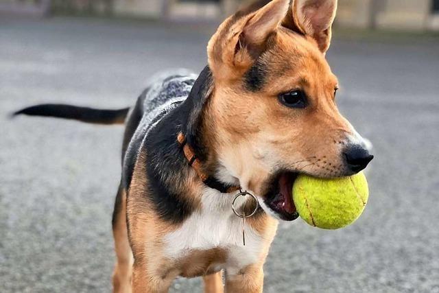 Gemeinsames Spielen ist wichtig für Hund und Herrchen
