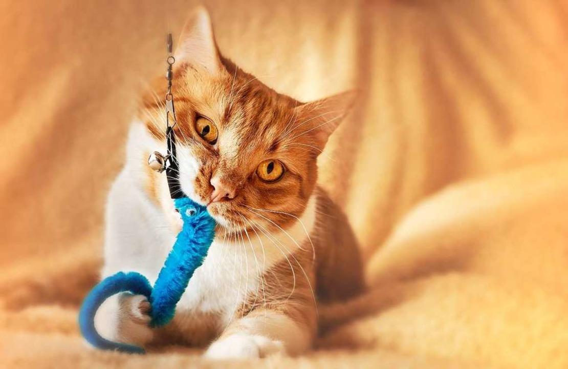Hauskatzen haben einen reizarmen Alltag – Spielen fördert die gute Laune.  | Foto: Dorothe Wouters (Unsplash)