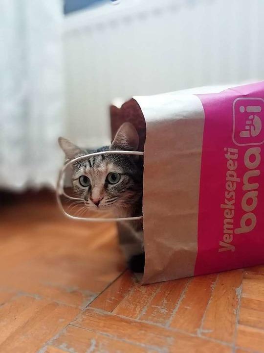Spielzeug für Haustiere muss nicht teuer sein.  | Foto: Brusk Dede (Unsplash)