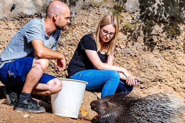 Wie ist es, als Tierpfleger im Basler Zoo zu arbeiten?