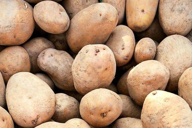 Diebe klauen eine Tonne Kartoffeln von einem Acker bei Breisach