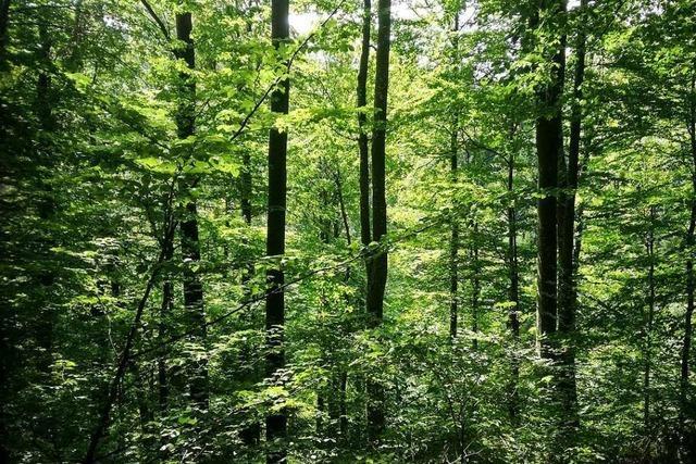 Förster und Naturschützer sollten gemeinsam an der Zukunft des Waldes arbeiten