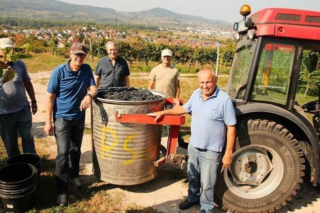 Nach dem politischen Weinberg sollen Bürger Rebstück in Gottenheim übernehmen