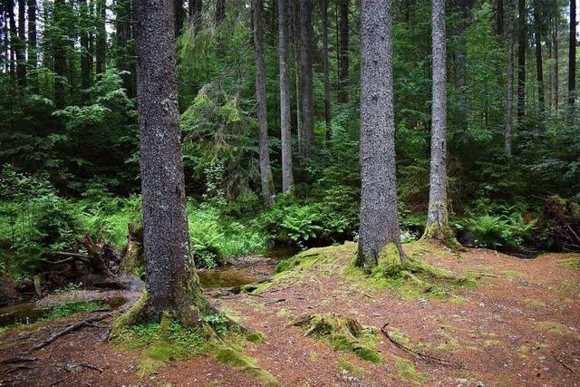Baden-Württemberg will Klimaschutzstiftung gründen – und erntet Kritik