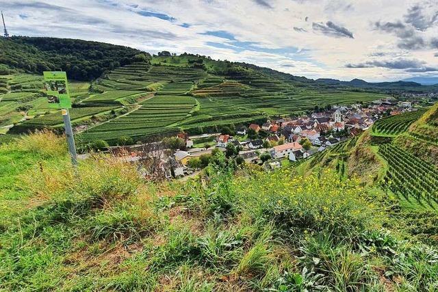 Eine Wanderung auf dem Kaiserstühler Panoramaweg bei Oberbergen