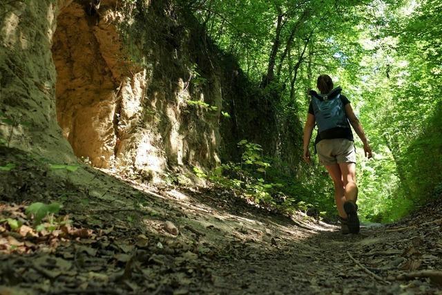 Wie die Pandemie die Wanderwelt verändert – Waldparkplätze voll wie noch nie